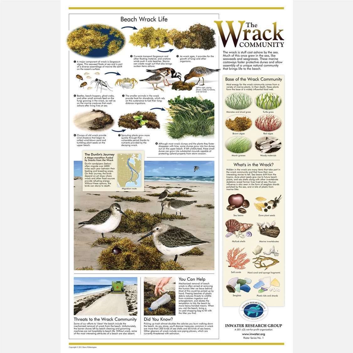 This beautiful poster provides information on the importance of the beach wrack community. Dunlins are the featured bird.
