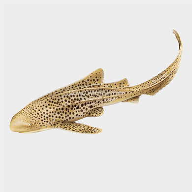This beautiful illustration of an adult zebra shark (Stegostoma fasciatum) is biologically accurate in detail