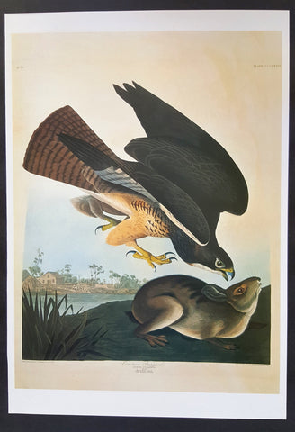 Swainson's Hawk ~ J.J. Audubon Scientific/Naturalist Illustration ~ 10x14