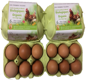 EGGS BIO LARGE * 6 FREE RANGE