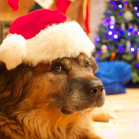 Why having a dog is the Best During the Holidays