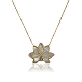 Nelumbo Shell Necklace