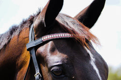 Pink, Black and Clear Crystal Browband - HB Horsewear