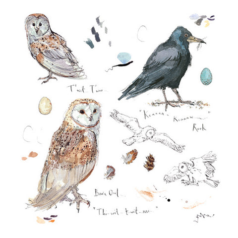 Madeleine Floyd - Barn Owl and Rook