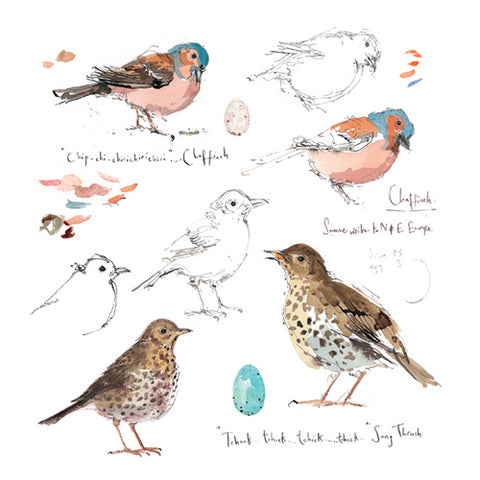 Madeleine Floyd - Chaffinch and Song Thrush