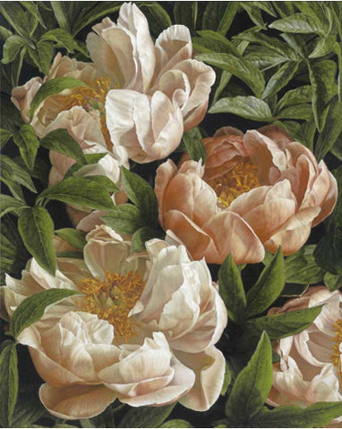 Mia Tarney - Coral Charm Peony (Limited Edition Print)
