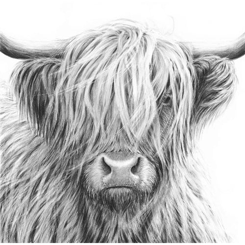 Nolon Stacey - Highland Cow V