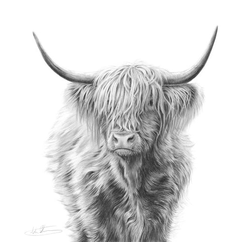 Nolon Stacey - Highland Cow
