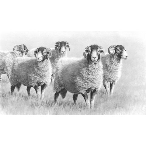 Nolon Stacey - Summer Swaledales
