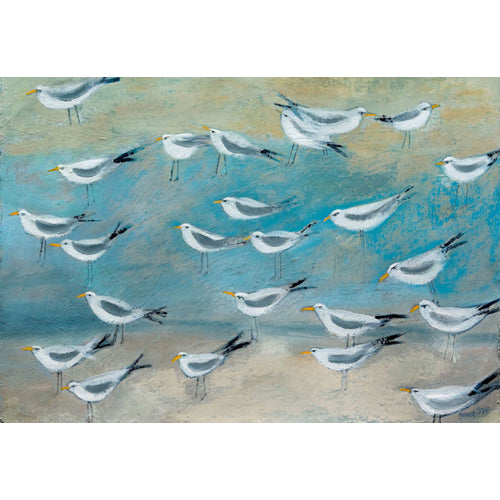 Hannah Hann - Terns Gathering
