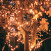 Solar-Powered LED Fairy Lights - Different Color & Length Options