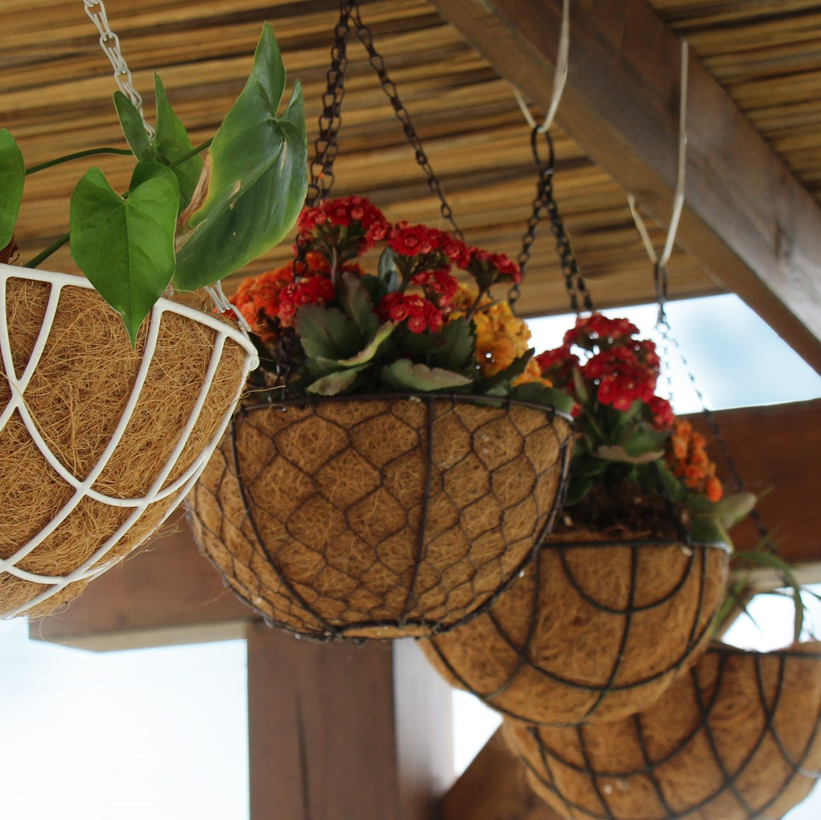 Coconut Hanging Planters, 2 Pack - 12 variations