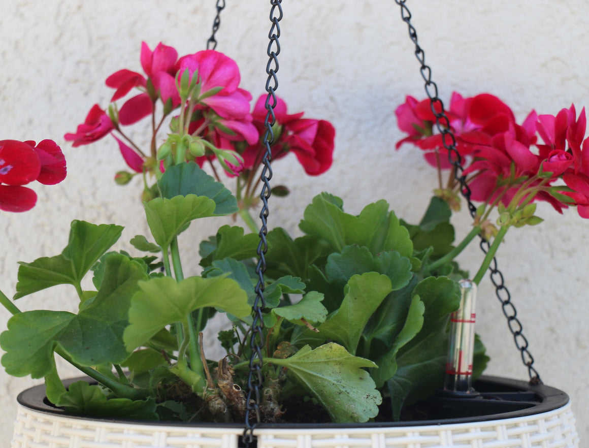 Rattan Hanging Planters (8 colors)
