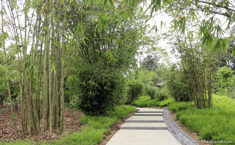 Botanic Gardens' Rainforest Walking Trail