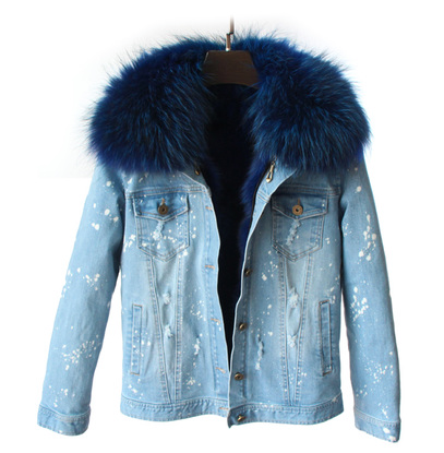 Distressed Denim Jacket with Royal Blue Fur Lining and Collar