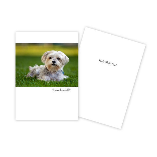 Notecard - Birthday - Shih Tzu - 0030