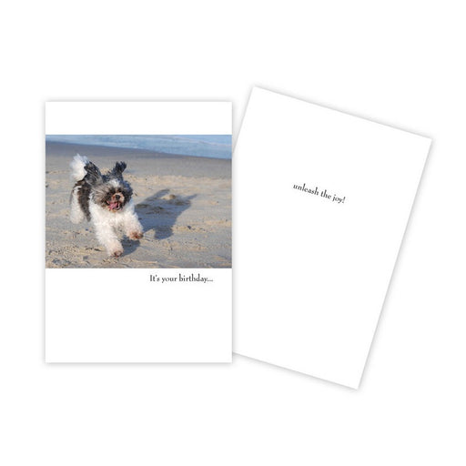 Notecard - Birthday - Dog on Beach - 0154
