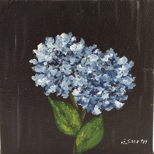 Original - 4x4 - Hydrangea Blossoms - Black Background - HBBlack-003