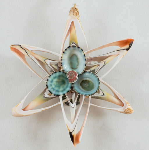 Ornament - Cut Shell Star - Limpet Center