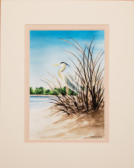 Print - 8x10 - Great Blue Heron in Sea Grass - Tan Matte