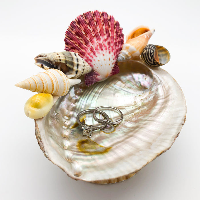 Abalone Shell Bowl - Shells - Medium