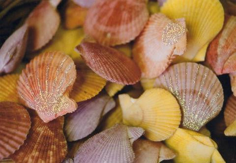 Glitter Photo Card - Scallop Shells