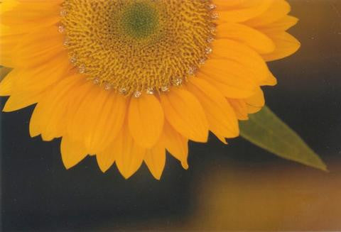 Glitter Photo Card - Sunflower