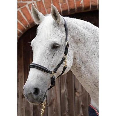 Premier Equine Padded Leather Head Collar-Headcollar-Southern Sport Horses