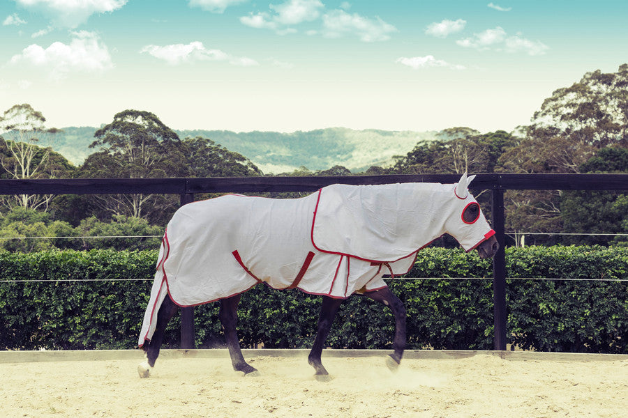 Equestrian Horse Product. Flag Rug Hood Set. White