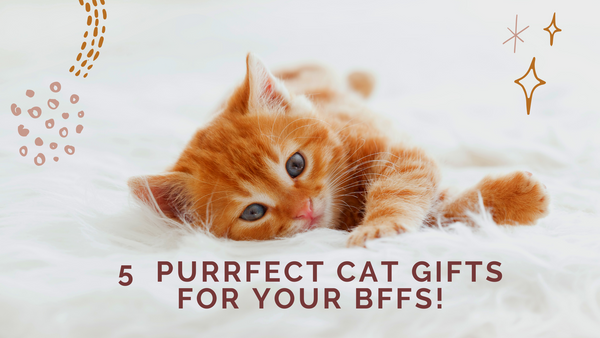 5  Purrfect Cat Gifts For Your BFFs!