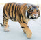 "Grand Size 55""Long Majestic Lifelike Jungle Apex Predator Bengal Tiger Statue"