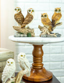 Colorful Barn Great Horned Snowy & Screech Owl Perching On Branch Figurine Set