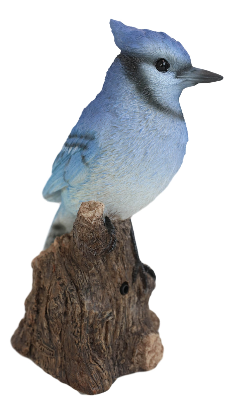 Pretty Blue Jay Perching on Tree Stump With Motion Activated Bird Sound Figurine