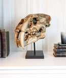 Sabertooth Tiger Cat Fossil Skull Skeleton Replica Statue With Museum Pole Mount