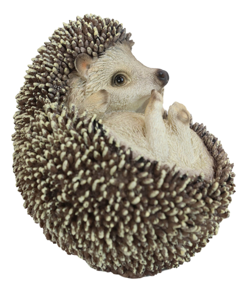 Lifelike Realistic Spinal Mammal Baby Hedgehog Lying On Back Decorative Figurine
