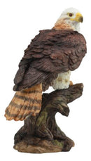 "Ebros Wildlife Red Tailed Hawk On Tree Stump Statue Birds Of Prey Figurine 10""H"