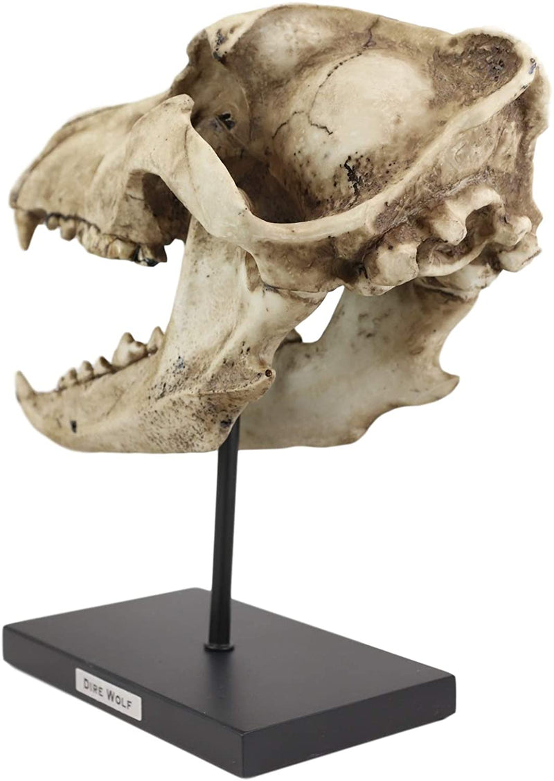 "Ebros Direwolf Fossil Skull Statue On Pole Mount and Brass Name Plate 12.5"" Long"
