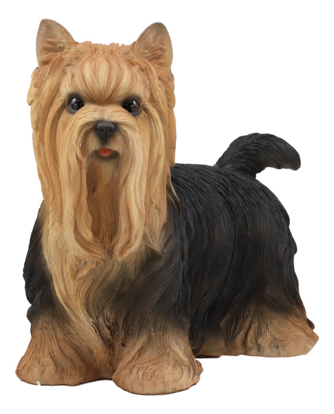 Ebros Realistic Long Haired Yorkie Statue 11 5 Long Pet Pal Yorkshire Terrier Dog Breed Collectible Resin Decor Figurine With Glass Eyes Animal