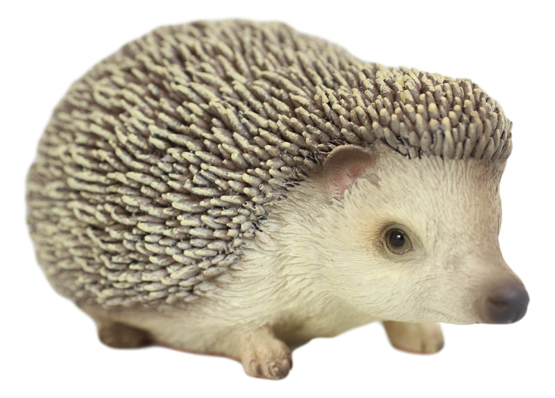 "Lifelike Realistic Spinal Mammal Animal Baby Hedgehog Collectible Figurine 6""L"