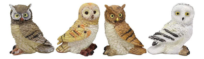 Colorful Nocturnal Owls Of The World Miniature Figurine Set of 4 Owl Theme Decor