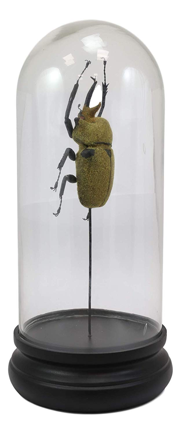 Ebros Exotic Entomology Beetle Faux Taxidermy Sculpture in Victorian Glass Dome Cloche Display Educational 3D Model Or As Mantelpiece Shelf Table Decoration Museum Gallery Figurine (Elephant)