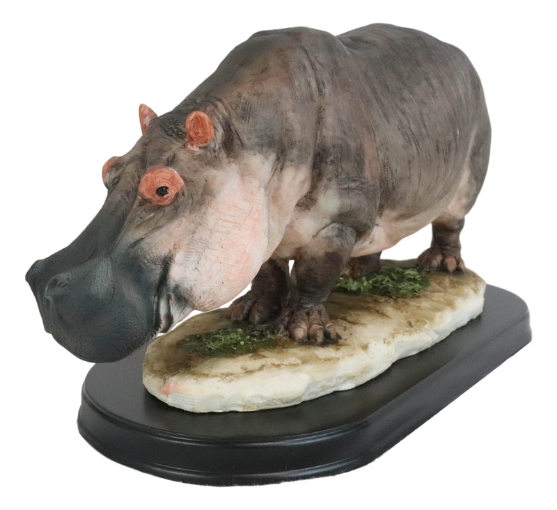 "African River Common Hippopotamus Statue On Black Gallery Base 11""L Hippo Decor"