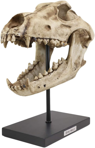 "Ebros Direwolf Fossil Skull Baring Jaws and Teeth Statue On Pole Mount and Brass Name Plate 12.5"" Long"