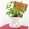 Botanical Bamboo Planter Stick
