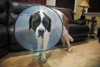 Replaces the need for the dreaded cone of shame