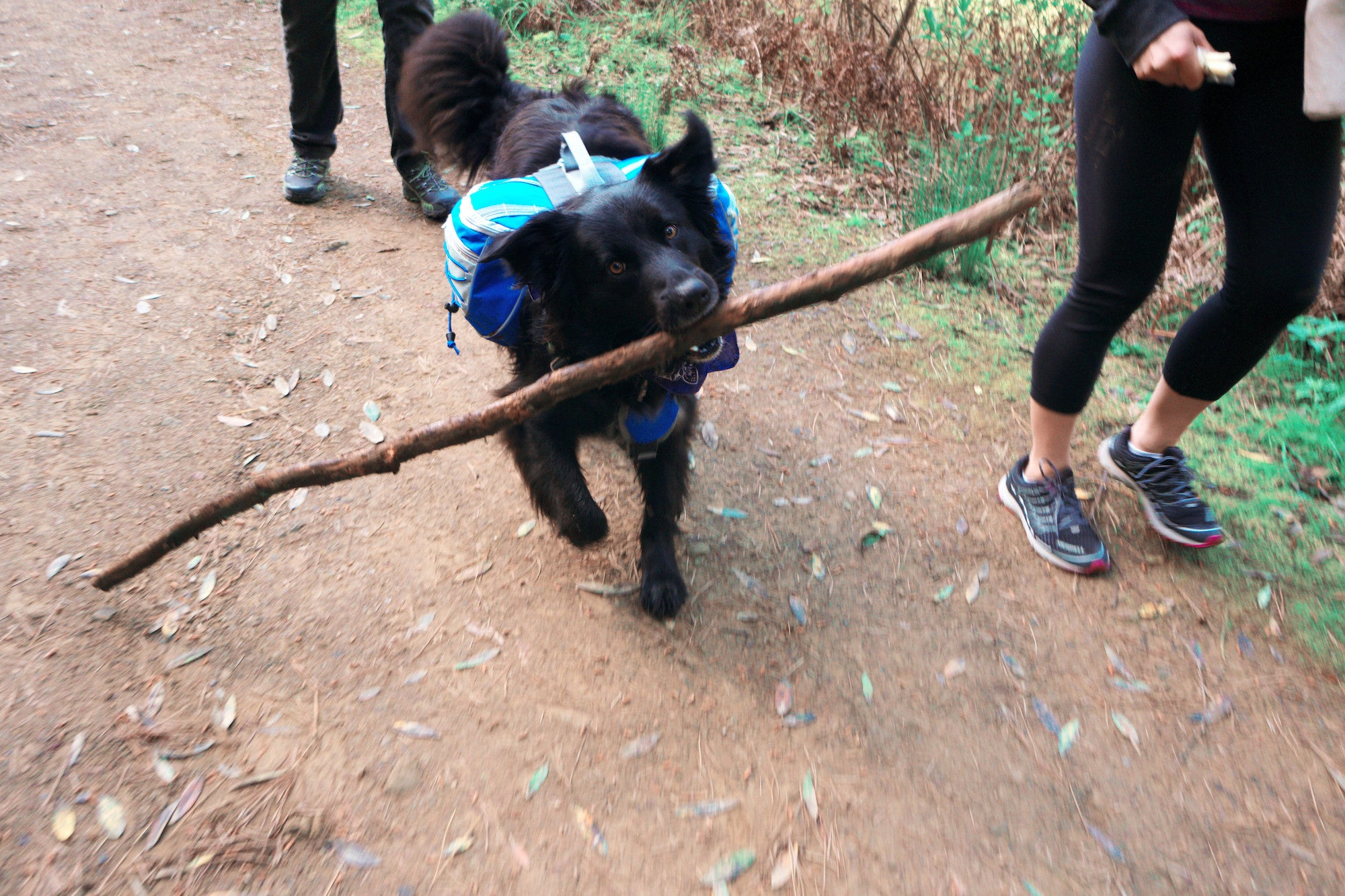 The 6 most important Items to bring on a long dog hike