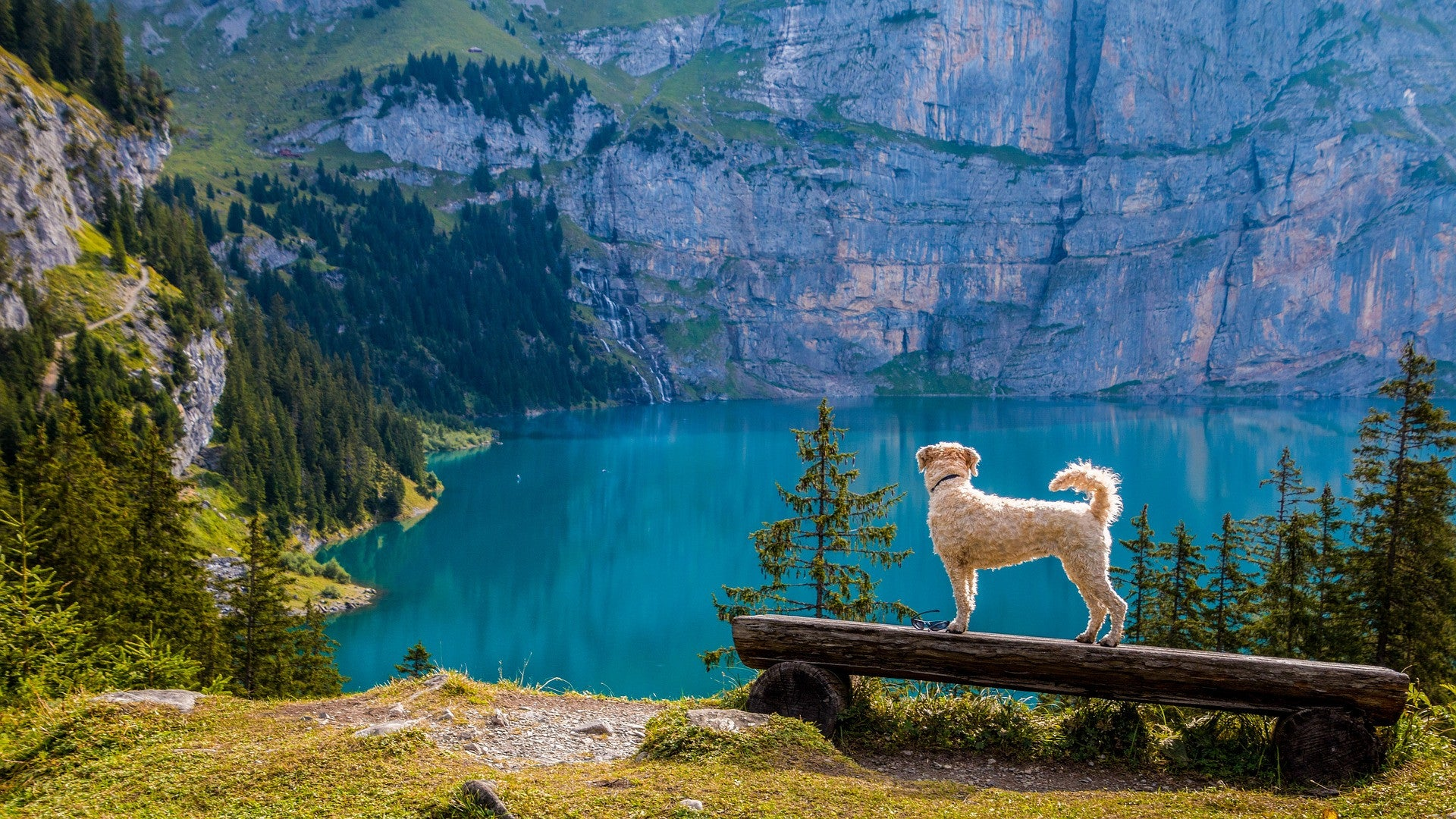 We found the most spectacular, dog friendly, hiking trail in the entire world.