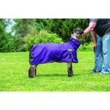 ProCool Mesh Sheep Blankets-Weaver Leather Livestock-Ludlow Livestock Supply