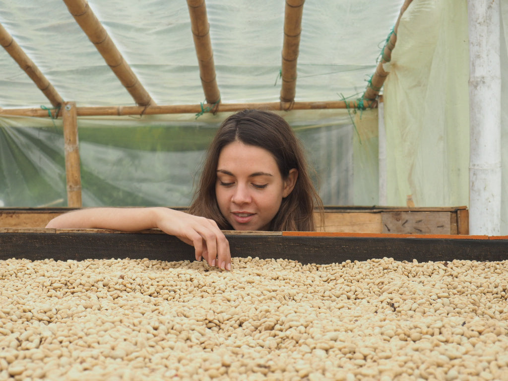 Washed Coffee Drying Parchment Colombia