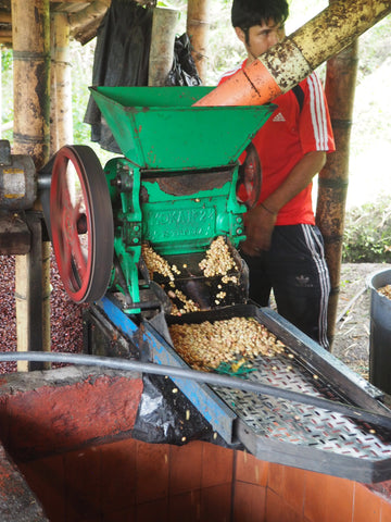 Coffee Processing at Leonid Ramirez's farm